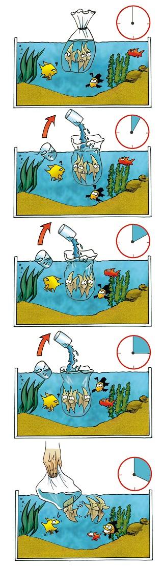 aquarium fische temperaturen